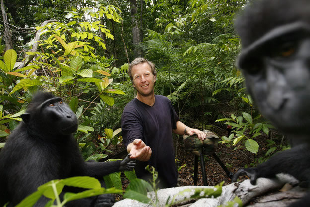 David Slater junto a los monos de Indonesia.