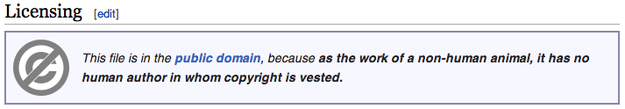 Wikipedia Copyright de animales (no humanos)