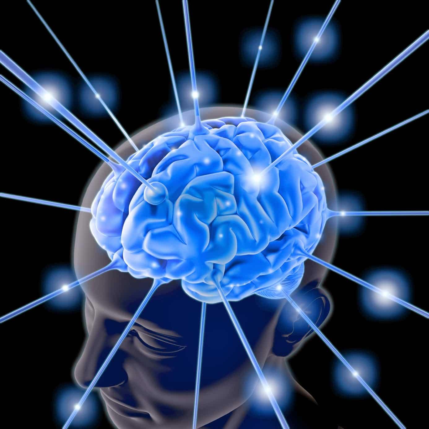 A través de una intervención en el cerebro de ratas, científcos de Stanford lograron eliminar algunos recuerdos.