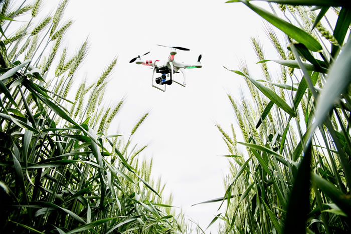 Drone-Pastor: Los drones ya se utilizan en la agricultura. Por ejemplo: la aplicación de pesticidas.
