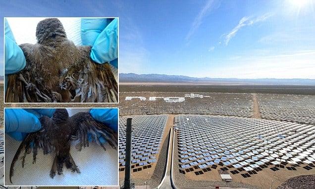 Esta imagen, del año pasado, ya exponía el problema con las aves que genera la planta.