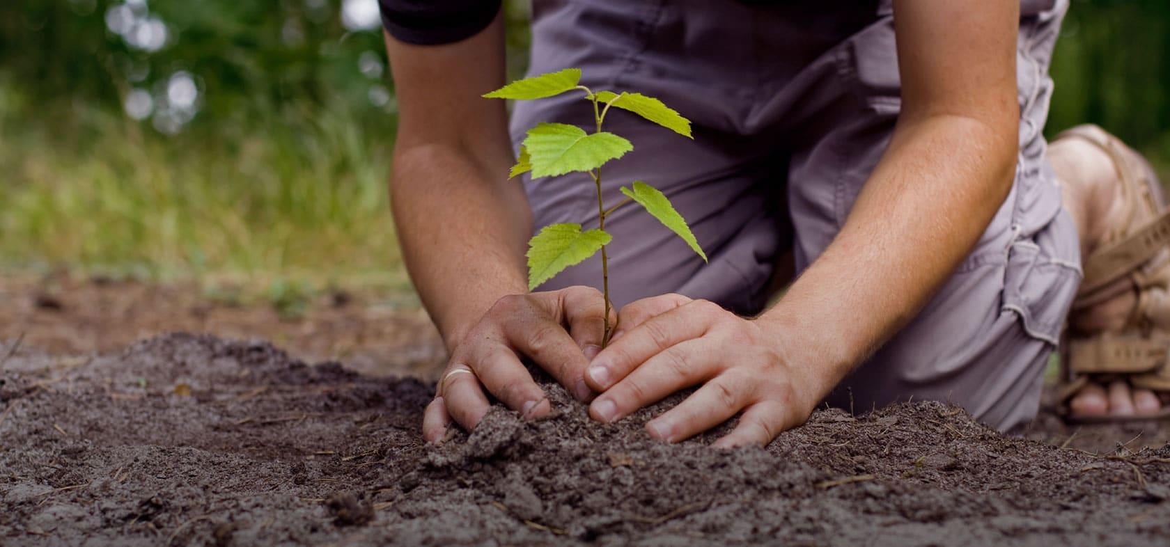 Plantando árboles.