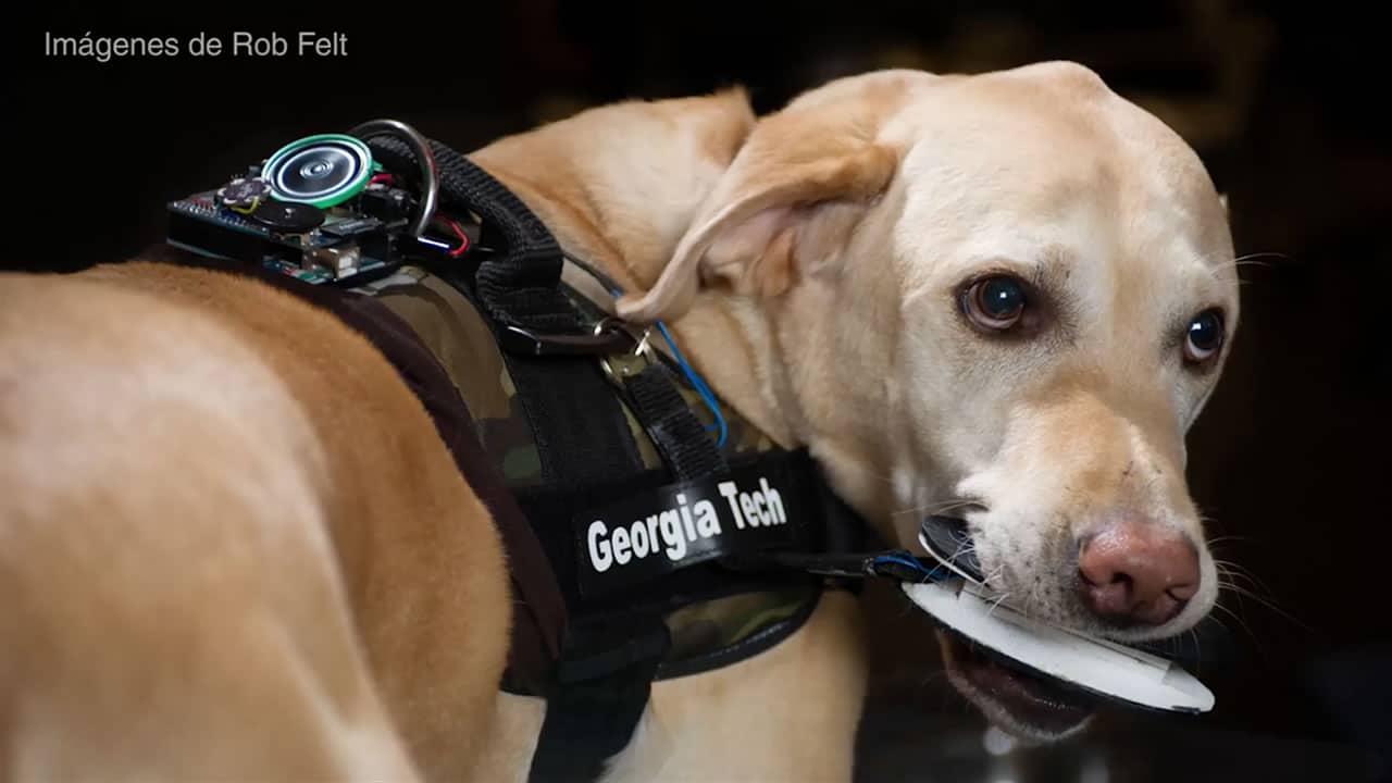 Dos perros son los que cooperan en el desarrollo del proyecto FIDO.