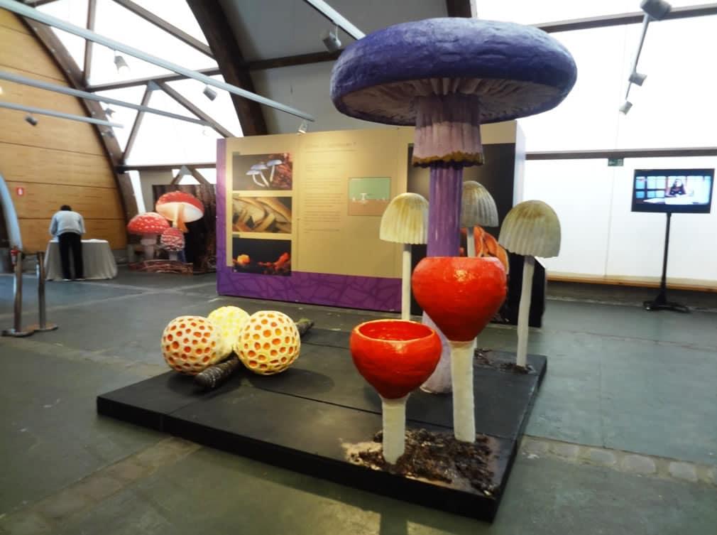 La exposición de hongos estará disponible en el Museo Nacional de Historia Natural.
