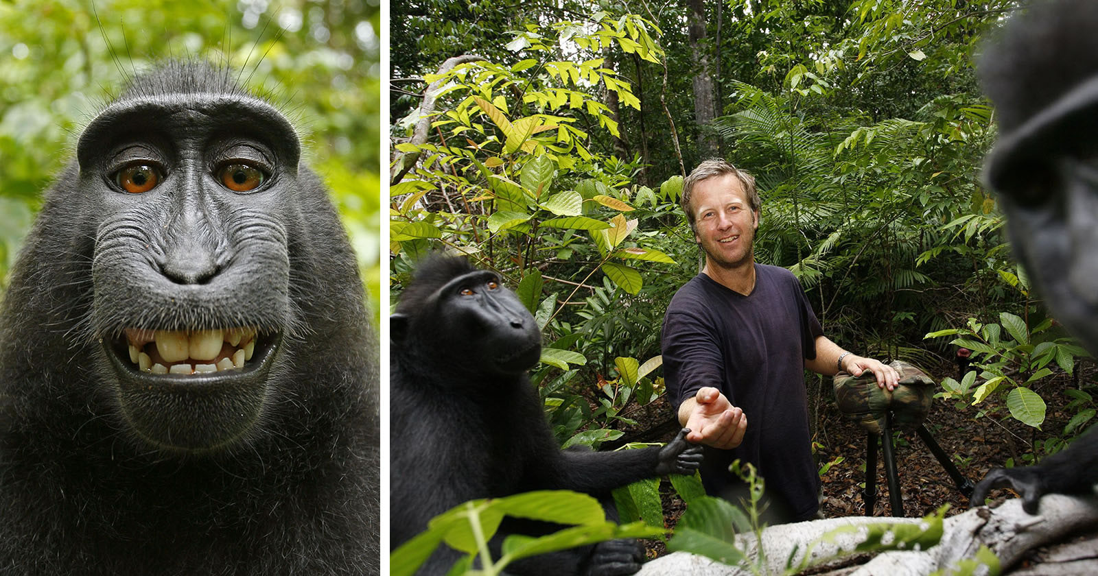 La selfie de mono de David Slater.