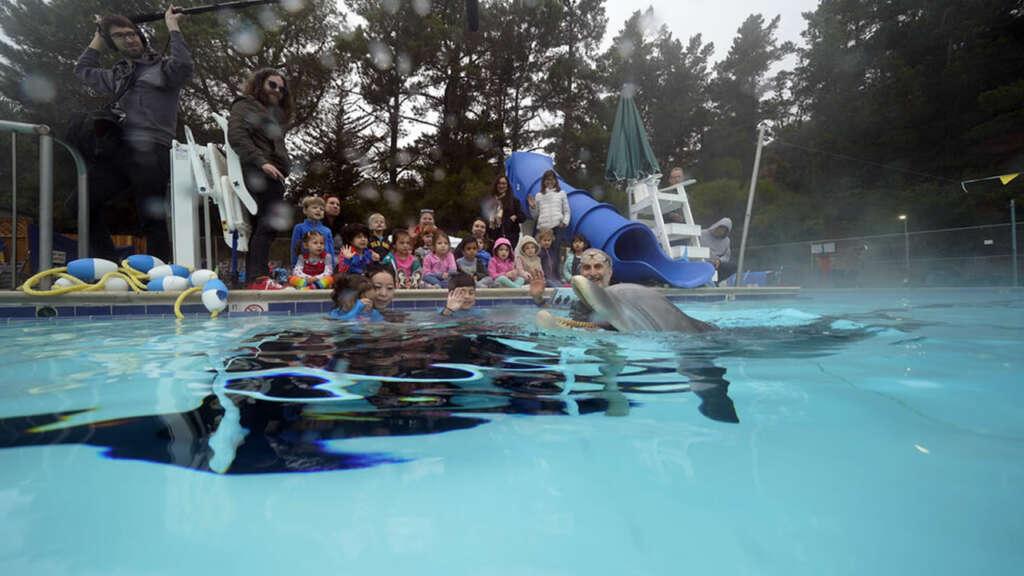 Crean un delfín robot para reemplazar a los reales en los acuarios.